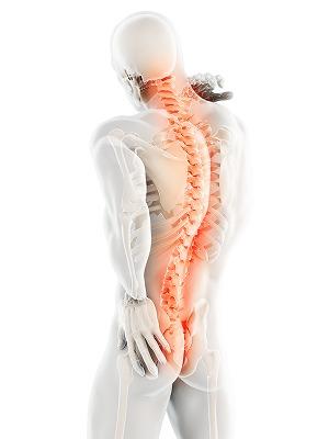 頚椎・胸椎・腰椎